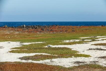 Colorful Landscape on Mosquera Island