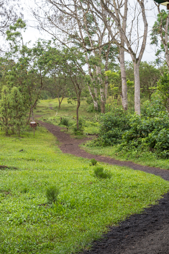 Giant Tortoise Reserve on Santa Cruz in Galapagos National Park