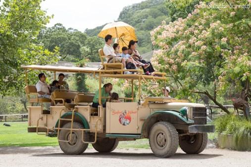 vintage Dodge safari jeep