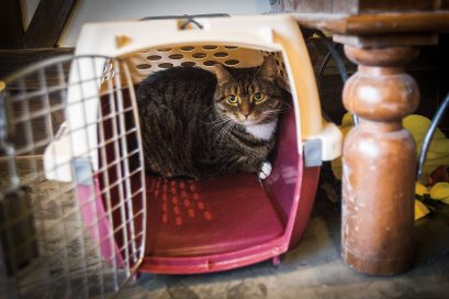Seattle cat cafe
