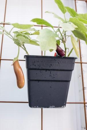 Eggplant, This is Life Wellness