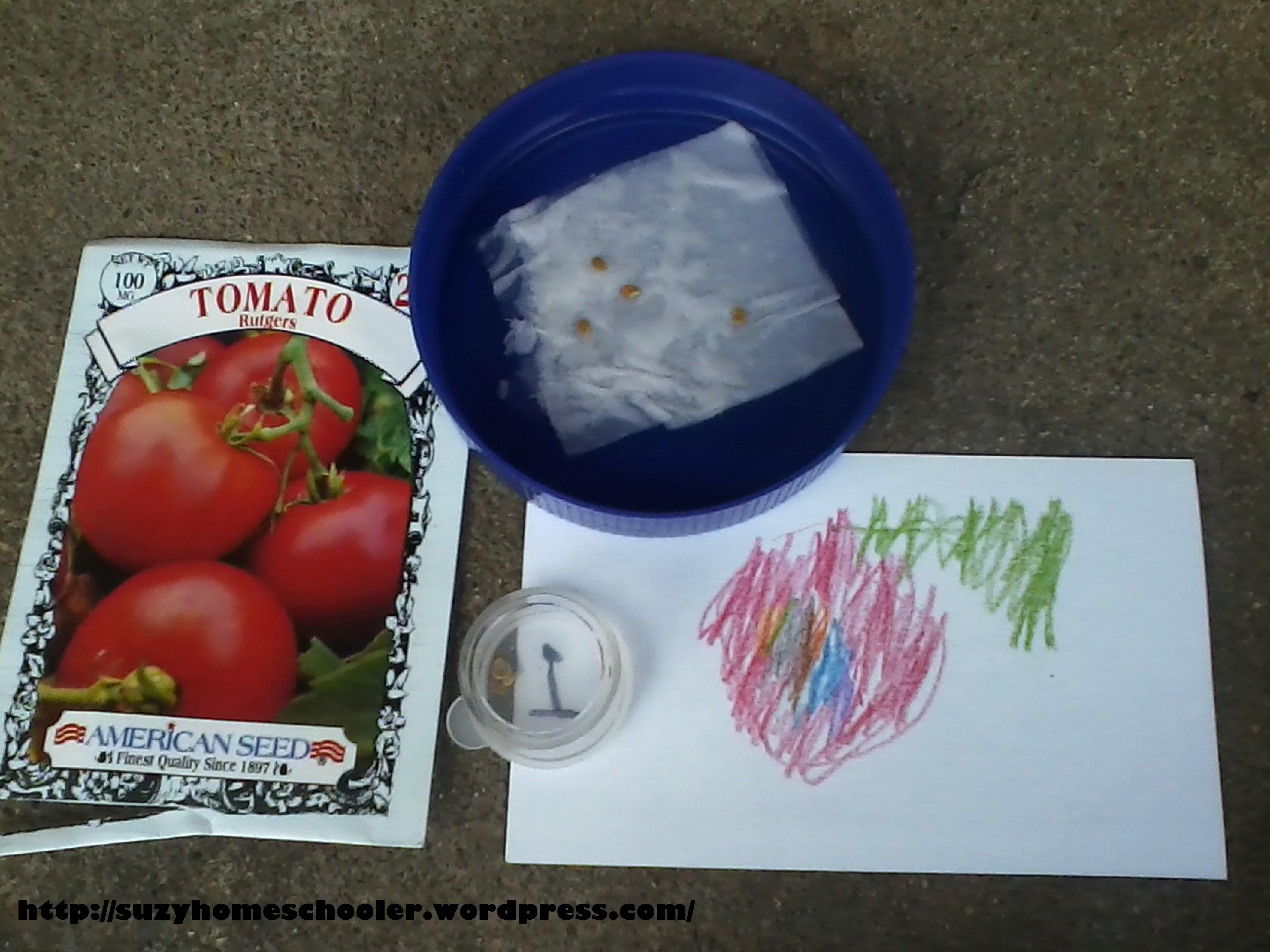 Exploring Seeds Suzy Homeschooler