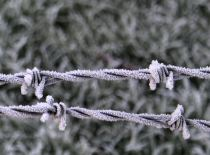 Wire on Frosty Morning on 21st January 2016