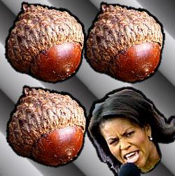 250wde_MichelleObama_Nuts