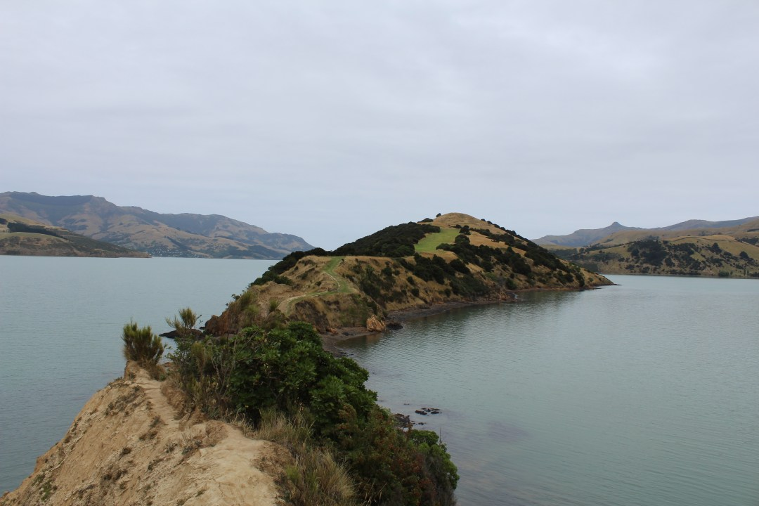 onawe peninsula stretches into bay of akaroa