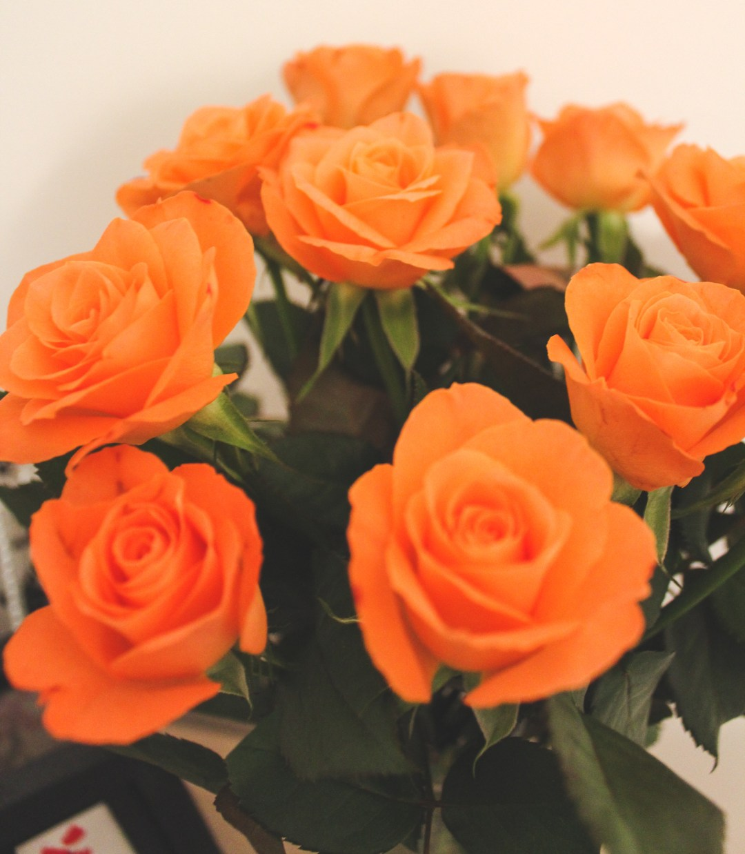 Orange roses: Me at 24 - reflections on a year of being 24, thinking about all that was achieved, done, and changed in the past year.
