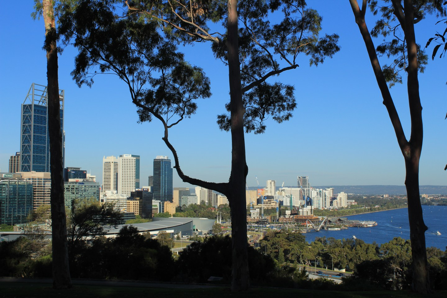 Perth city as viewed from above through silhouetted trees