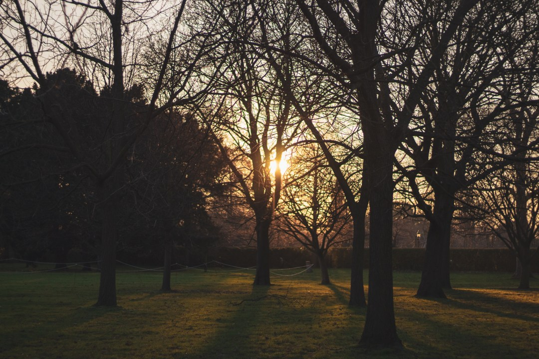 Things To Know When Moving To London - Sunset through the trees in Regent's Park