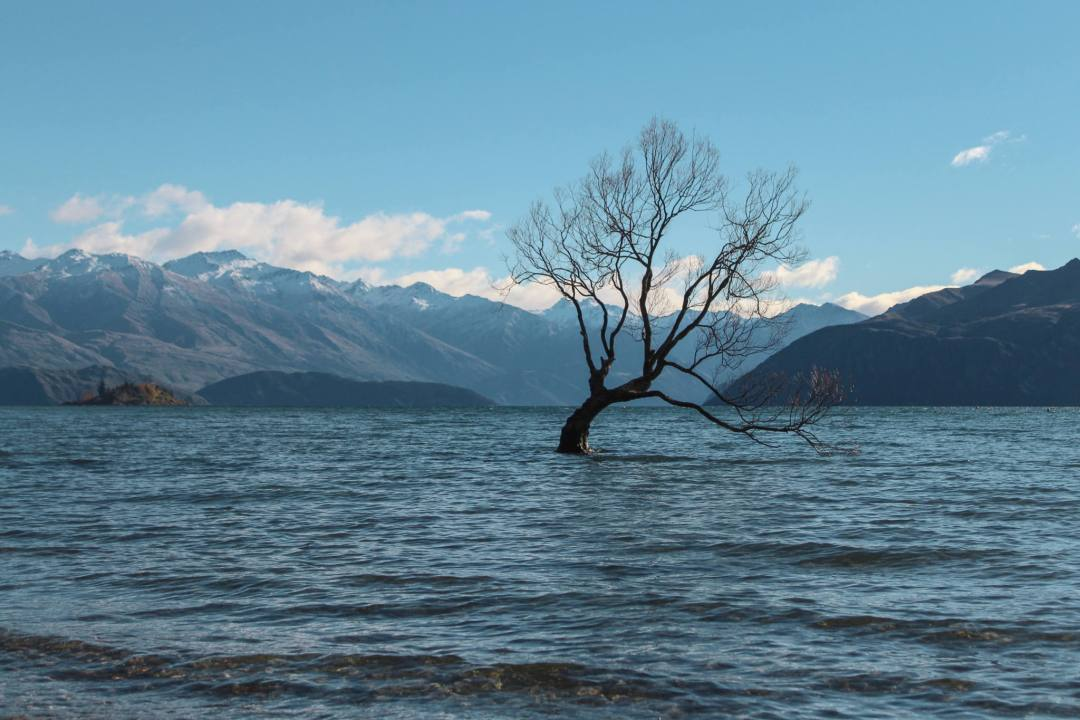 tree stands out in lake surrounded by mountains