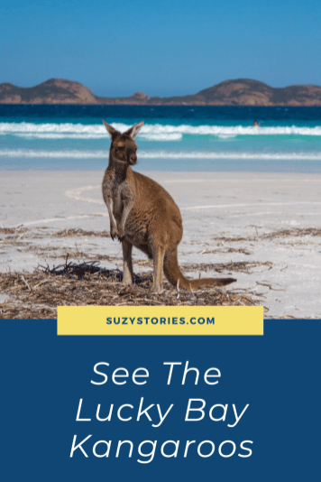 Discover all you need to know about seeing the Lucky Bay Kangaroos in Western Australia, including tips, advice, and more.