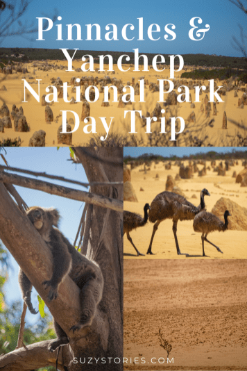 collage of photos at pinnacles desert and yanchep national park