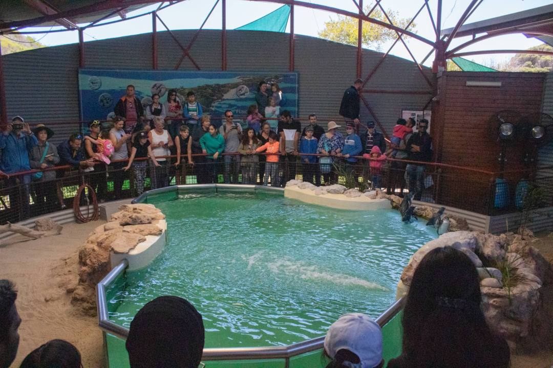 crowd watch penguin feed in penguin enclosure