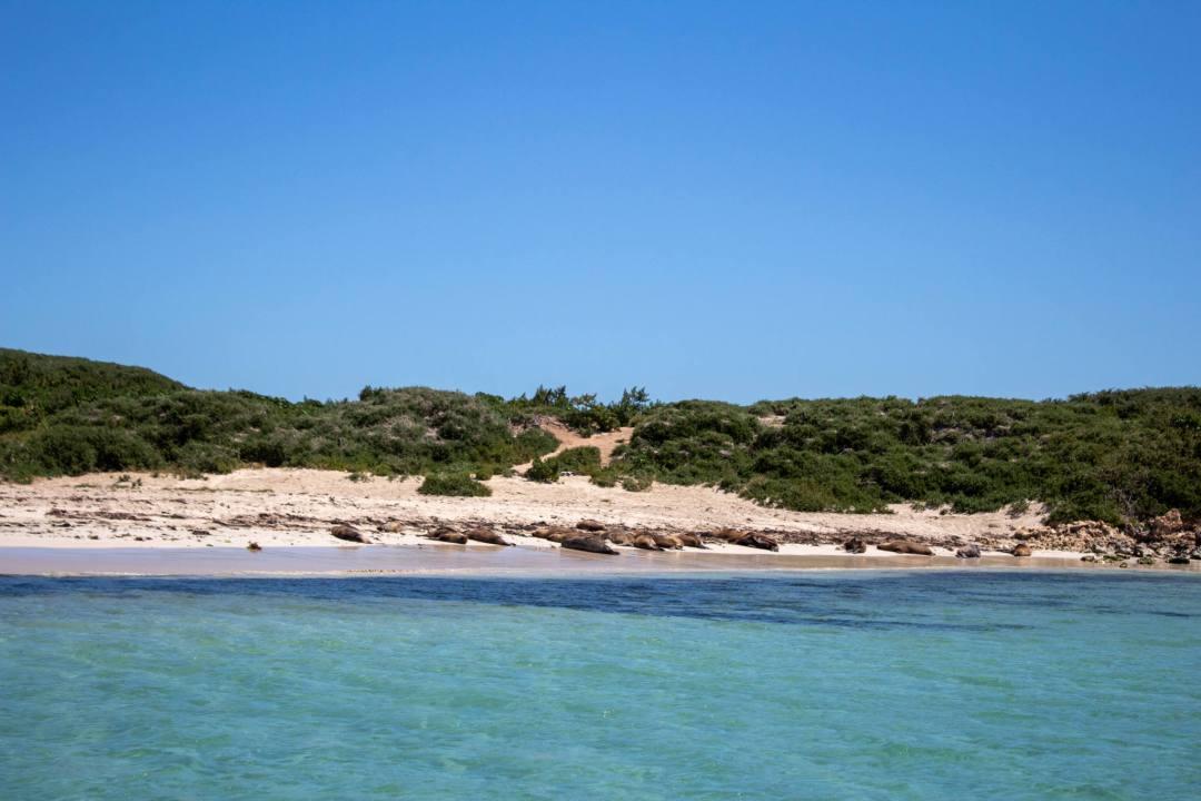 sea lions sleep on beach