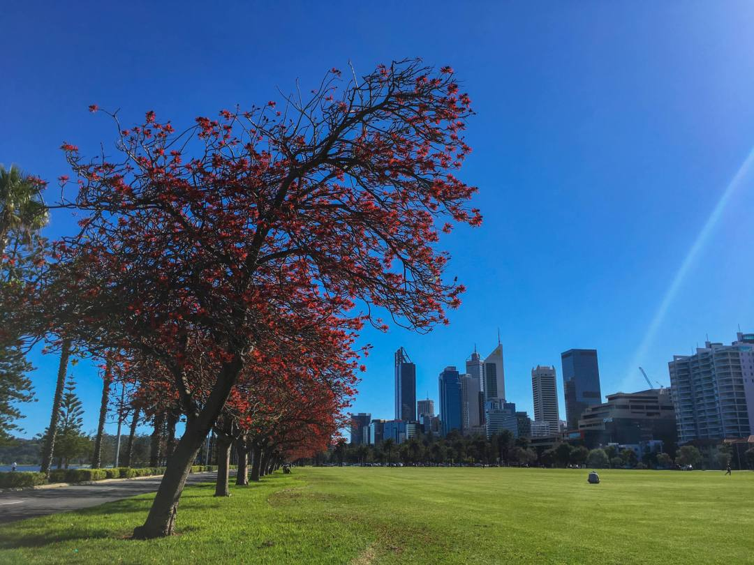 view of perth city from langley park