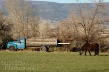 Brown Horse in field Colorado