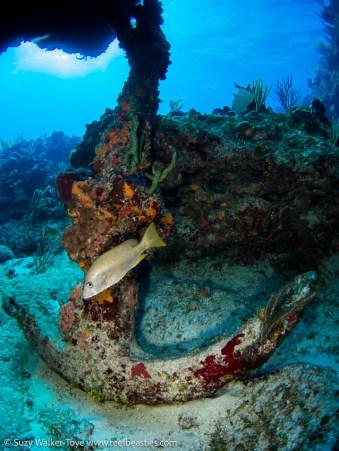 Anchor, Cayman 2016