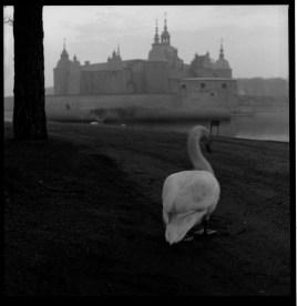 svan_och_slott