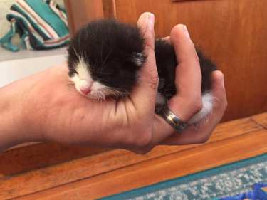 our clean little fluff ball fit perfectly in Chris's hand
