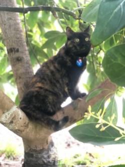 Cleo exploring the Avocado tree