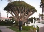 Hotel del Coronado Gardens