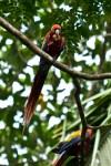 Costa Rica-141