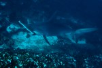 Coco Underwater-141