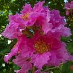 Harrison Smith Botanical Gardens