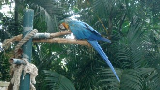 Colorful birds aplenty