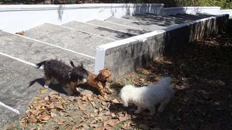 Charlie tentatively meets two other dogs who were just dying to make a new friend.