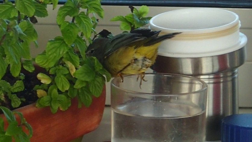 After a sip of water, back to work on the plant