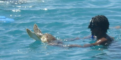 Turtle released back to freedom