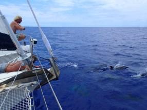 Matt and Chris enjoying our dolphin escort