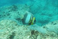 fishies-4