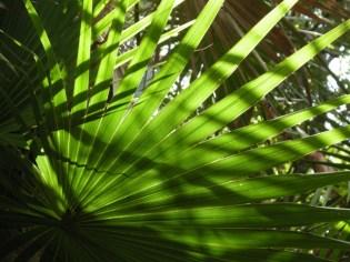 backlit palm