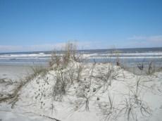 LS_20130505_153931 Cumberland Island Seashore