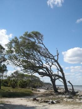trees on Driftwood Beach