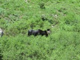 moose revealed