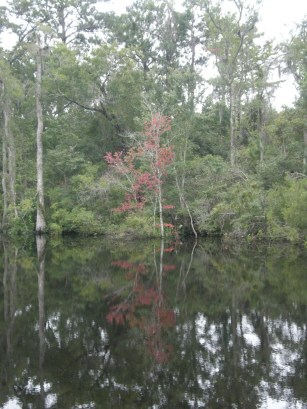 early color on the Waccamaw River
