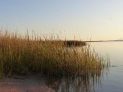 fading light over marsh grasses