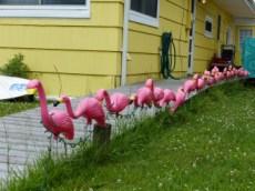 flamingo parade, Kismet, near Fire Island
