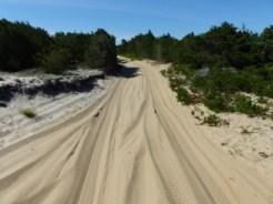 overland vehicle trail, Cape Poge Wildlife Refuge
