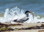 tern with snack