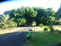 Banyan – Old Banyan Tree tunnel with motorbike we rented in foreground