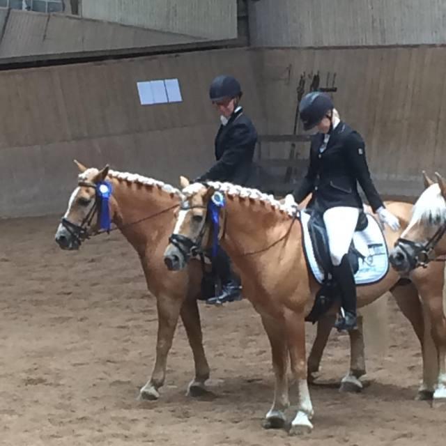 Svenska Haflingerfreningen och Haflingersport Sverige har intagit Vetlanda med sinahellip
