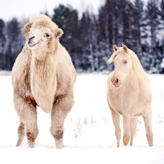 Tvling p SHs Facebook idag om bsta vinterbilden! Skynda atthellip