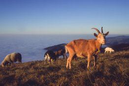 Belchen im Schwarzwald 1993