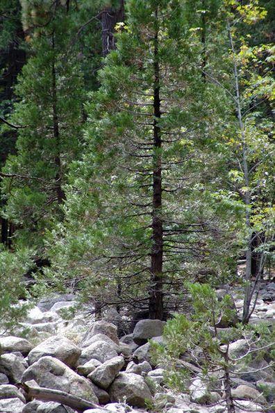 2005-californien-027