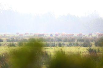 2011-fischland-darss-zingst-005