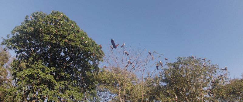 big-birds