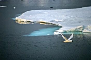 Antarctica (286 of 290)